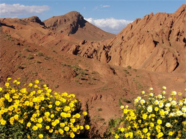 foto-1-fioritura-sulle-montagne-dell-atlante-2221625_600x01